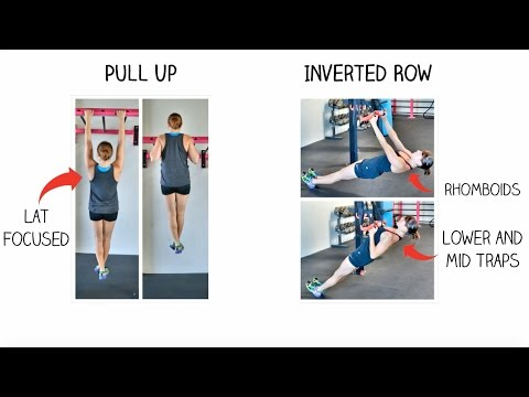 The Pull Up vs. The In... Inverted Rows Muscles Worked