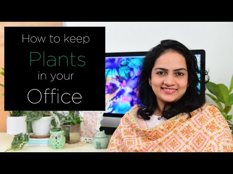 How to keep plants in your office space | How to gardening | Office plants