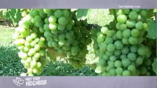 Meet Your Neighbor...Shelton Vineyards