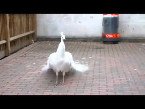 Dünyanın en güzel kuşu