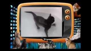 А Вы видали как плавают коты??? СМОТРИТЕ приколы про кошек!!!