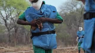 老鼠排查地雷帮人类挽救生命