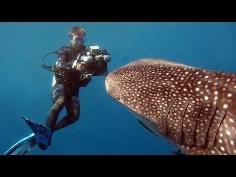 Whale Sharks - Reef Life of the Andaman - Part 3