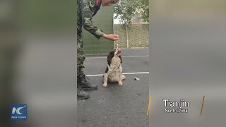 How to train a military dog to refuse food during a mission