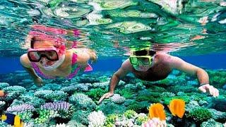 Египет 2020 снорклинг в шарм эль шейхе что я беру для подводного плавания в красном море рифы рыбки