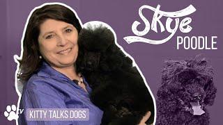 Kitty Talks Dogs: grooming Skye the Miniature Poodle | TRANSGROOM