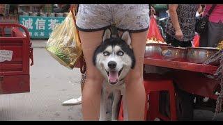 Сборник Смешных Видео Роликов №9 * Русские приколы *
