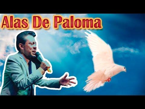 Alas de Paloma-Julio Elias