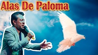 Video Alas de Paloma-Julio Elias download MP3, 3GP, MP4, WEBM, AVI, FLV Agustus 2018
