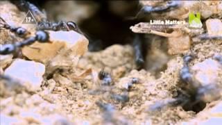 Мир насекомых и пауков (трейлер)