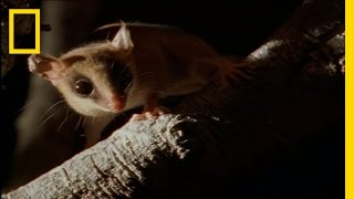Bats by Night | Wild Detectives