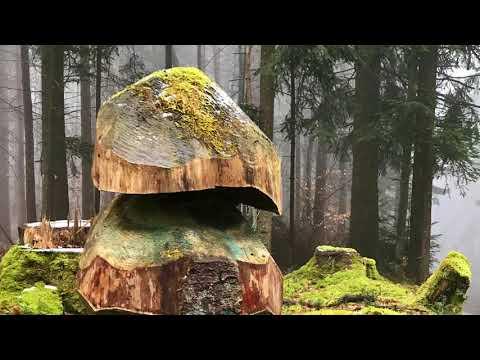 Hoheneck Forest, Kaiserslautern/Ramstein area