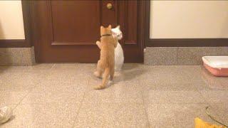 チロ兄貴は外に出たいみたい。 もうちょっとで扉開けられちゃうところで...