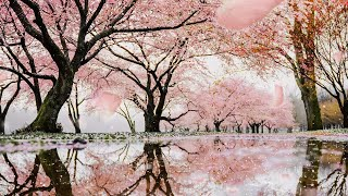 Spring Rain Ambience - Relaxing rain and birds sounds for sleep with falling cherry blossoms screenshot 3