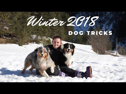 WINTER 2018 ~ DOG TRICKS ♡