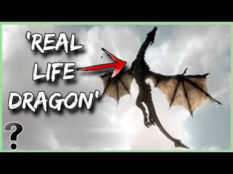 What If Dragons Were Real?