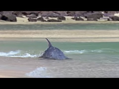 Hydroplaning Dolphins | Planet Earth | BBC Studios