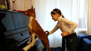 Dog sings and plays the piano