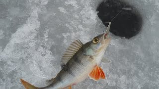 Окунь(вот такая получилась рыбалка)