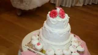 Свадьба Светлана и Александр
