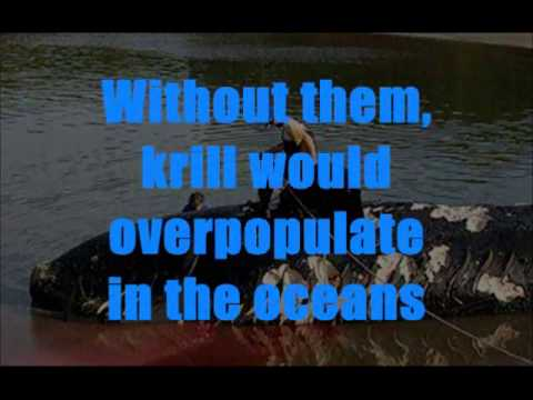 Northern Right Whale RIGHTS