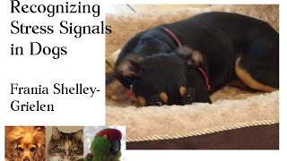 Stress Signals in Dogs