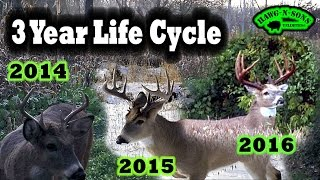 Hunting Deer 2016 BIGGEST 3.5 Year Old Whitetail Buck EVER Crab Claw II Life Files