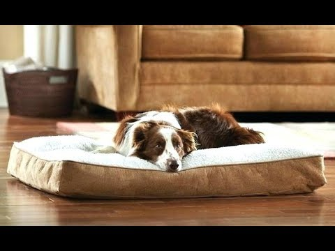 best-memory-foam-dog-beds---the-comfiest-bed-for-your-canine!