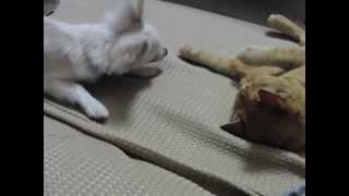 【握手した犬と猫】 Dog and cat shook hands