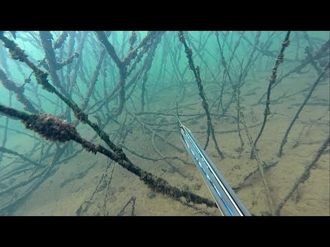 SPEARFISHING 2018 - PARANÁ RIVER 1 - TEAM TRIANGLE OF THE WATERS