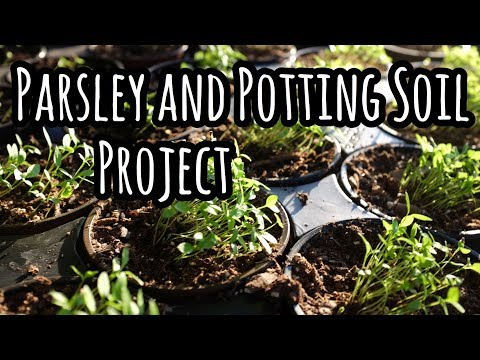Parsley and Potting Soil Project- Which potting soil is best?