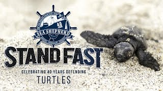 Stand Fast: 40 Years Defending Turtles