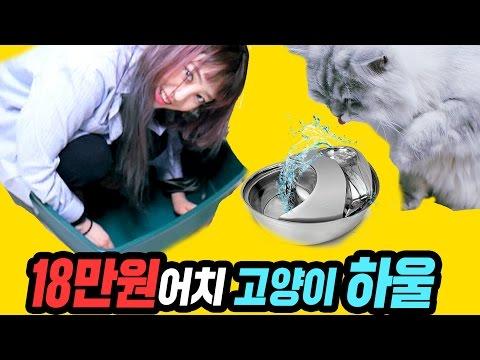 폭풍 쇼핑★ 18만원어치 고양이 용품들을 샀다! [ 사람도 들어가는 초대형 고양이 화장실 / ASMR 겸용 고양이 정수기 / 엄청난 간식 서비스! ] 망가녀 Manganyeo