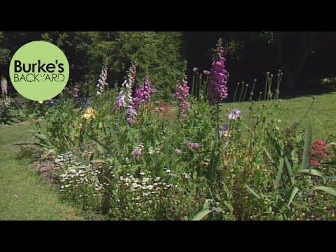 Burke's Backyard, Foxglove Spire Garden