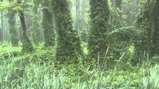 Ичнянский национальный природный парк. Часть первая(Ичнянский национальный природный парк расположенный на юго-западе Ичнянского района Черниговской области..., 2013-01-25T12:05:31.000Z)