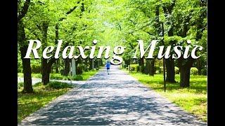 さわやかで心地よい朝の音楽・BGM・癒しのギターカフェミュージック(YouTube BGM Backgroundmusic)