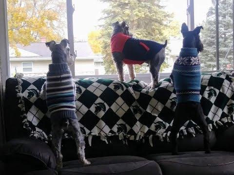 Schnauzer Statues | New Sweaters | Dog Mom Life