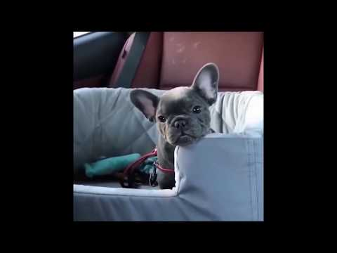 Try not to laugh   cats and dogs vines #1
