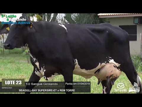LOTE 23 - REM GRANJA - REM0294 - 0872-AU - 5º LEILÃO GIR E GIROLANDO GENÉTICA ADITIVA