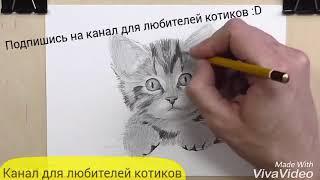 Рисуем котика. Видеоурок.