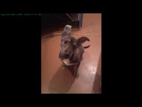 отдам щенка в хорошие руки (Украина, Кривой Рог)