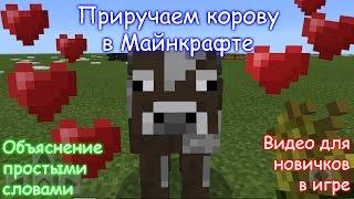 Как приручить корову в Майнкрафте / Minecraft PE?