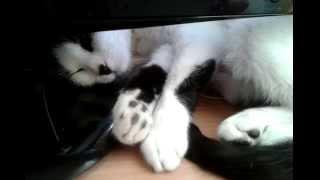 Кошка дергается во сне