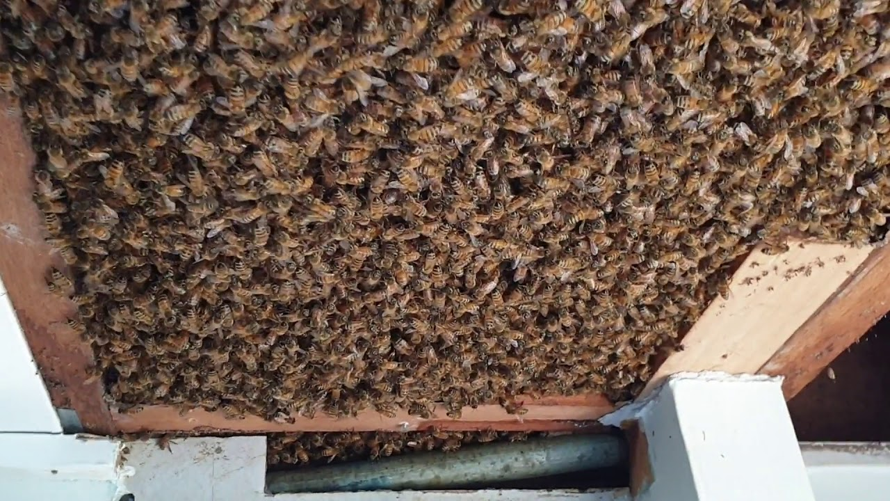 beekeepers called to hive