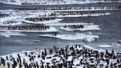 Effects of Global Warming on Chinstrap and Adelie Penguins
