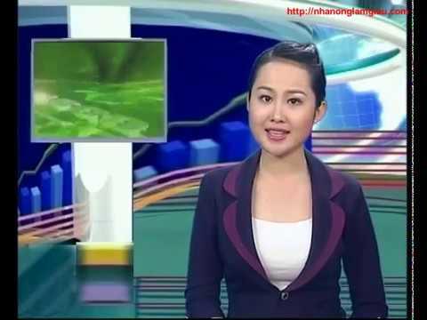 Nhanonglamgiau.com - Anh Thương binh Võ Văn Hồng vượt khó làm giàu