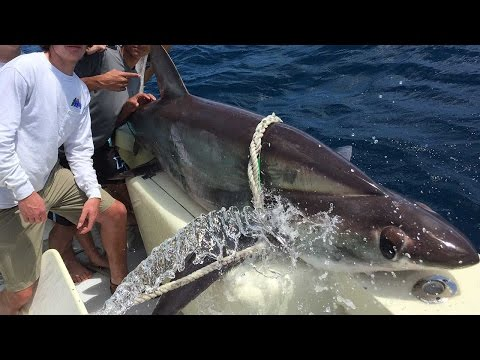 Hollywood Florida Fishing Report With Captain David