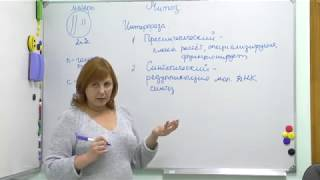 Митоз, мейоз. Интерфаза. Урок биологии репетитора Лурий Дины Валерьевны. Подготовка к ЕГЭ.