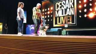 Bear Bear in Cesar Millan Live! @ KL Convention Centre, Kuala Lumpur, Malaysia.