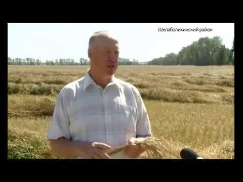 Как отделить зерна от плевел с минимальными потерями